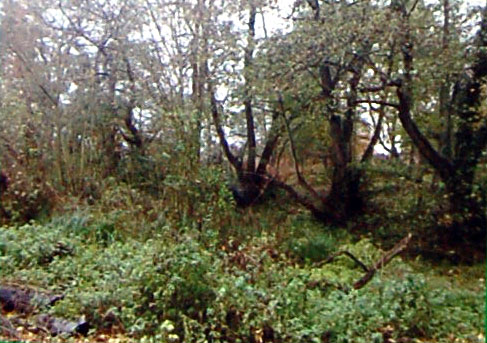 The overgrown moat before construction started